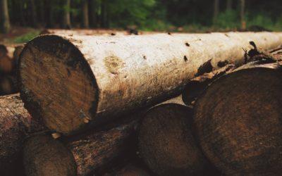 Gemeinschaftliche Baumfällaktion – Wer haftet bei einem Unfall?
